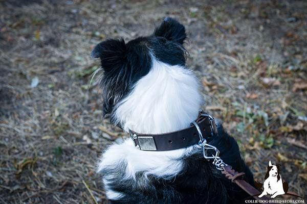 Leather Collie collar with durable nickel plated buckle