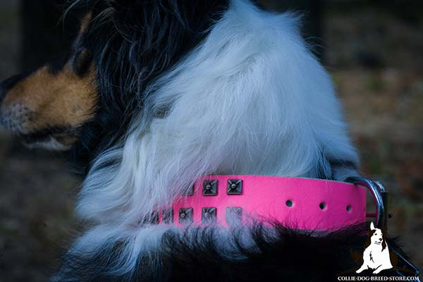 Close-up of stylish pink leather Collie collar