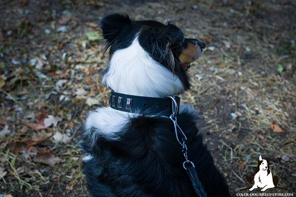 High quality leather Collie collar with rust-resistant hardware