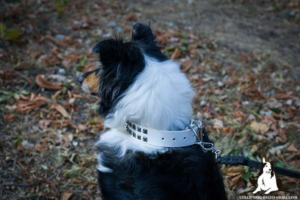 Easy-to-use white leather Collie collar with nickel plated fittings