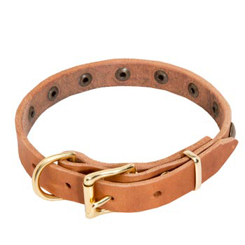 Collie Leather Collar with Studs