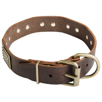War-Style Leather Collar for Collie