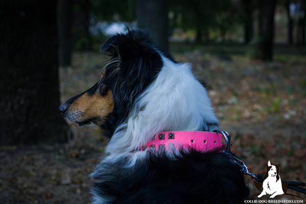 Decorated pink leather canine collar for Collie
