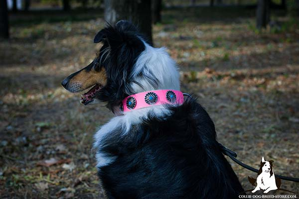 Amazing leather canine collar for Collie with blue stones