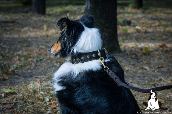 Sturdy leather dog collar for Collie with brass plated fittings