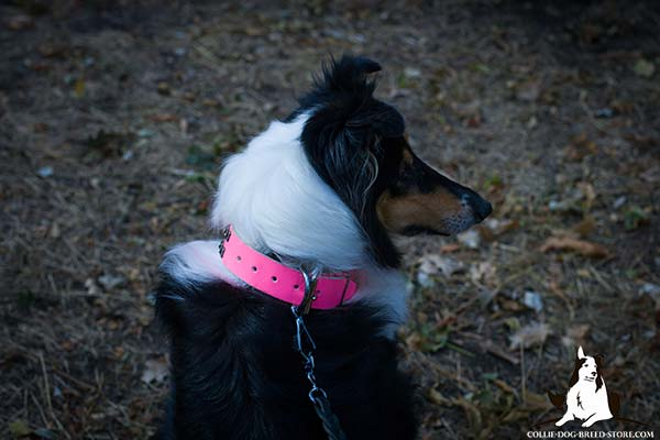 Amazing pink leather dog collar for Collie with shiny rust-proof hardware