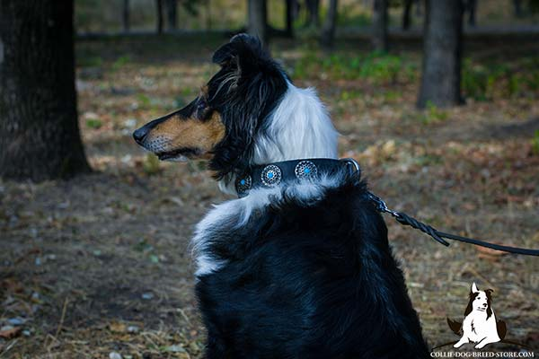 Adorned leather dog collar for Collie with incrusted conchos