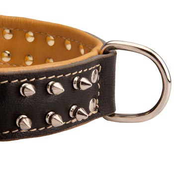 Padded Leather Collie Collar Spiked Adjustable for Training