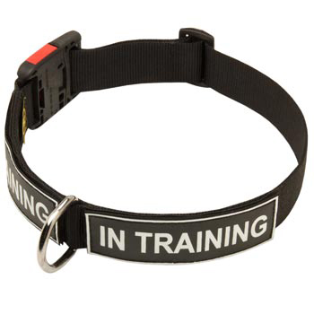Nylon Collie Collar With ID Patches
