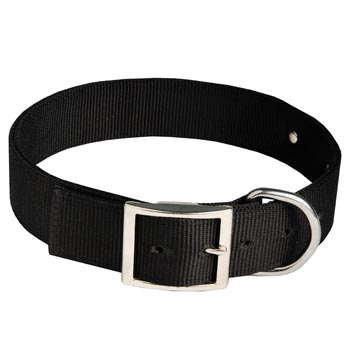 Collie Training Collar with ID Tag