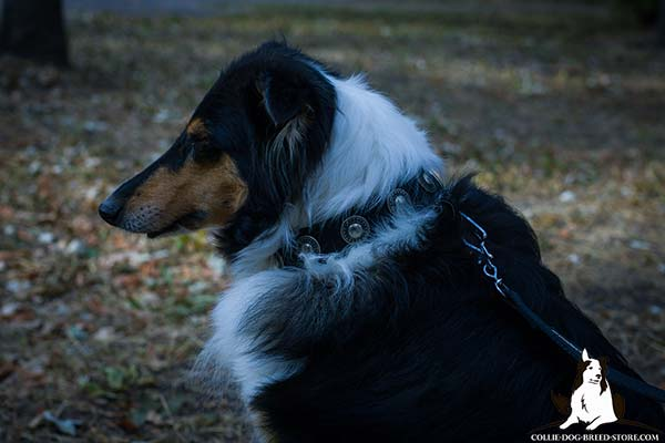 Wear-proof nylon dog collar for Collie with silver-like circles