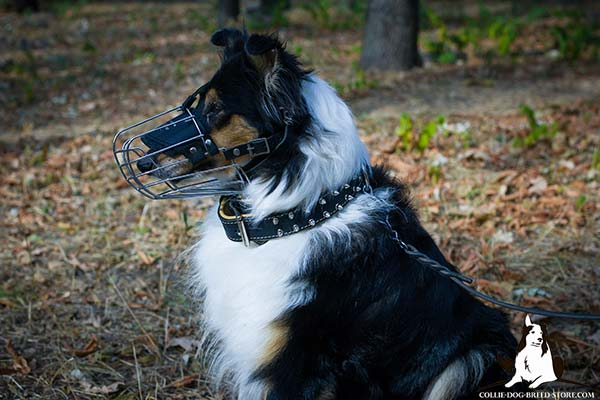 Spiked leather Collie collar with soft Nappa padding