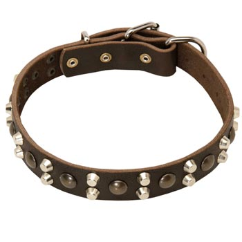 Leather Collar for Collie Stylish Walks