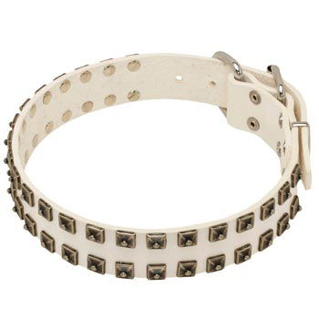 Studded White Leather Dog Collar for Collie