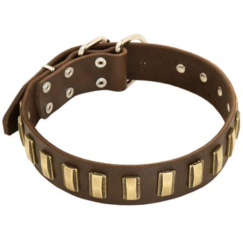 Leather Dog Collar with Adornment for Collie