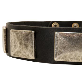 Wide Leather Collie Collar for Walking