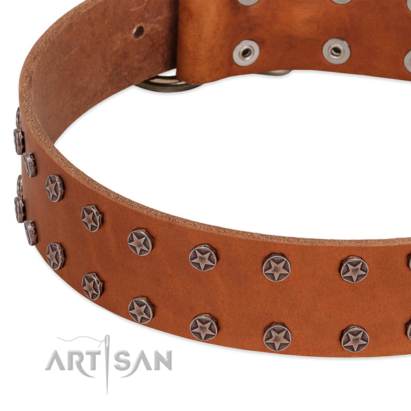 Unusual full grain natural leather dog collar for everyday walking