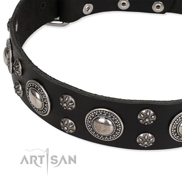 Comfy wearing decorated dog collar of strong genuine leather