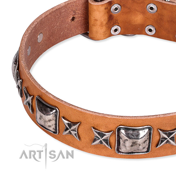 Everyday walking studded dog collar of top quality full grain natural leather