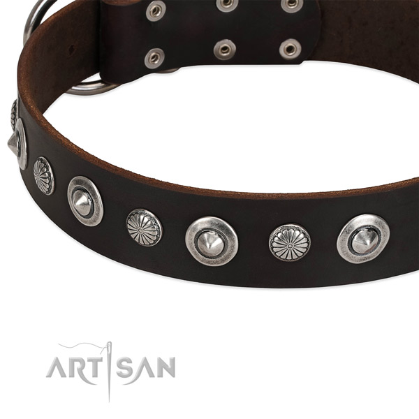 Exceptional adorned dog collar of durable leather