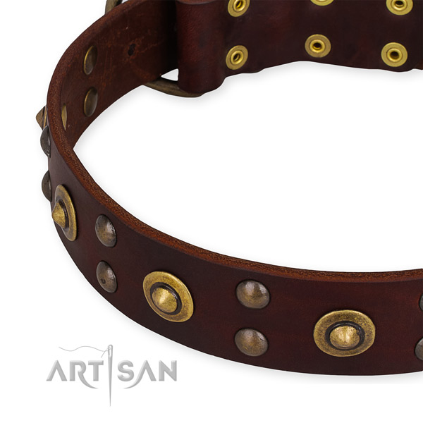 Genuine leather collar with rust resistant traditional buckle for your beautiful four-legged friend