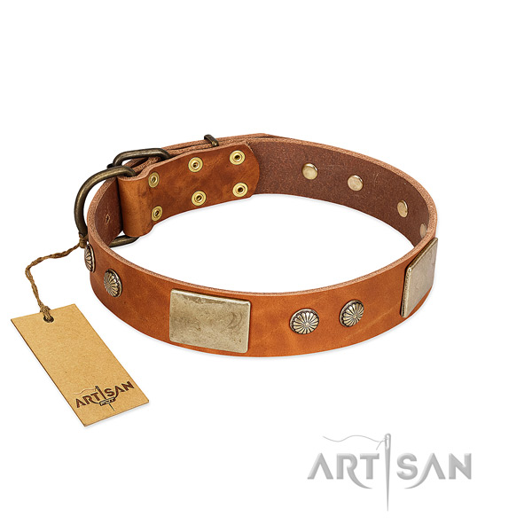 Easy wearing full grain leather dog collar for basic training your four-legged friend