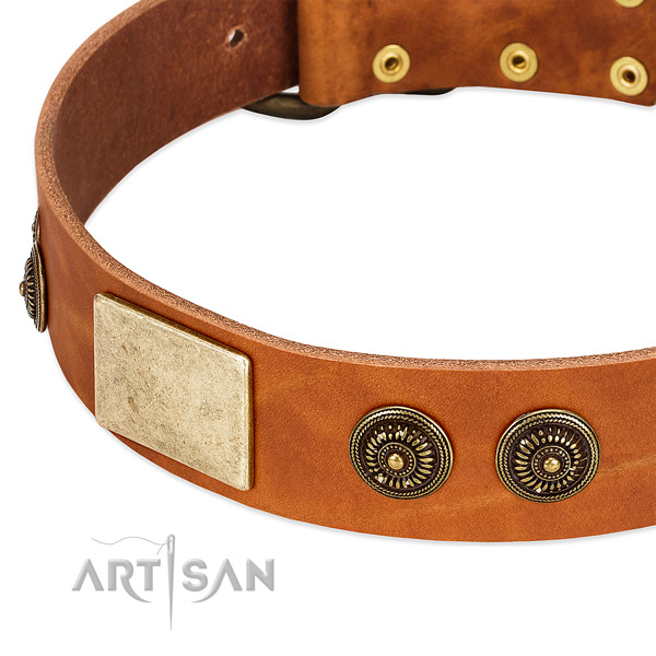 Trendy dog collar created for your handsome pet