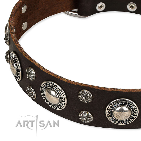 Everyday use studded dog collar of best quality genuine leather