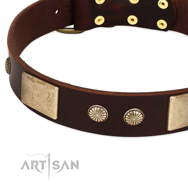 Corrosion resistant adornments on genuine leather dog collar for your canine