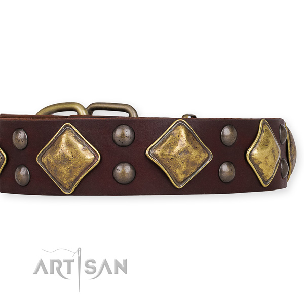 Leather dog collar with unique corrosion proof studs