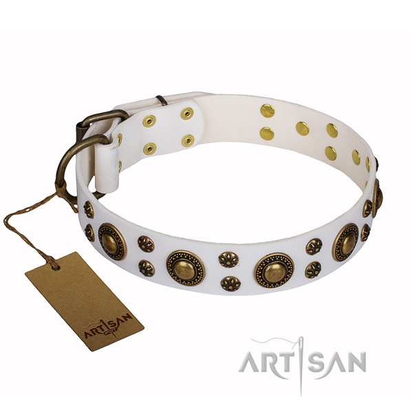 Stylish walking dog collar of fine quality full grain leather with adornments