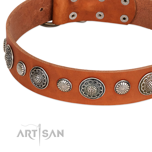 Genuine leather collar with strong traditional buckle for your handsome canine
