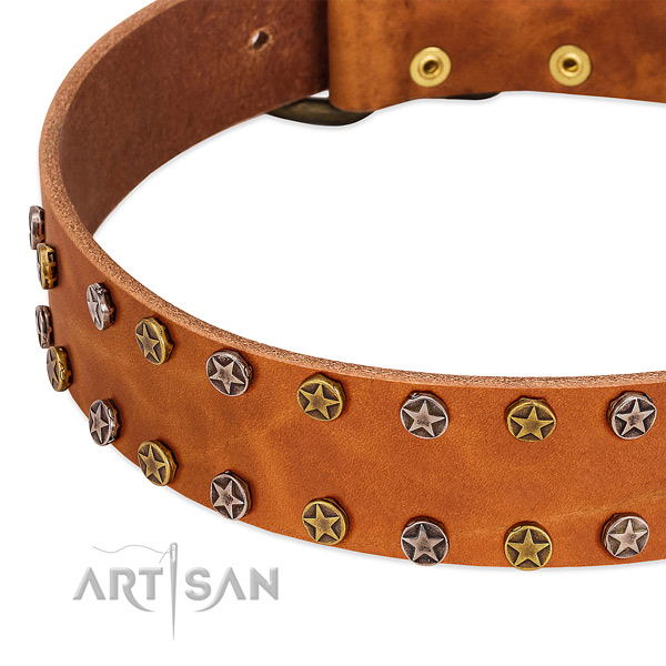 Everyday walking genuine leather dog collar with fashionable adornments