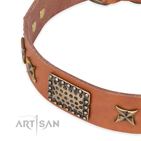 Leather collar with corrosion resistant traditional buckle for your impressive four-legged friend