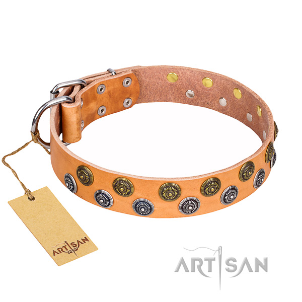 Daily use dog collar of finest quality full grain natural leather with embellishments