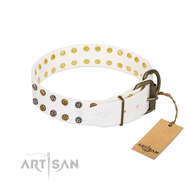 Amazing full grain leather dog collar with rust-proof studs