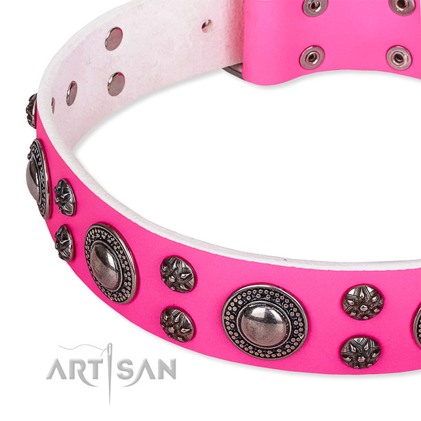 Daily use studded dog collar of finest quality natural leather