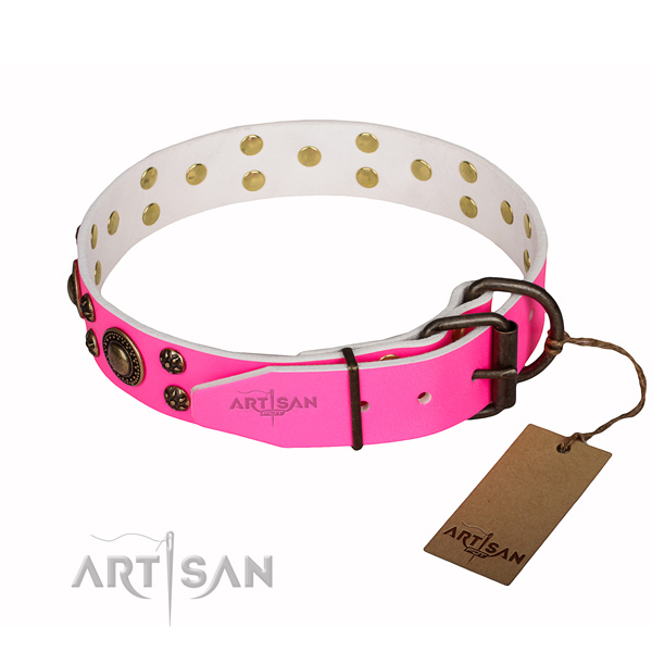 Walking studded dog collar of reliable full grain genuine leather
