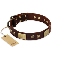"""Shining Armour"" FDT Artisan Brown Leather Collie Collar with Decorations"