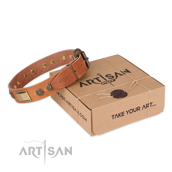 Rust resistant fittings on full grain leather dog collar for fancy walking