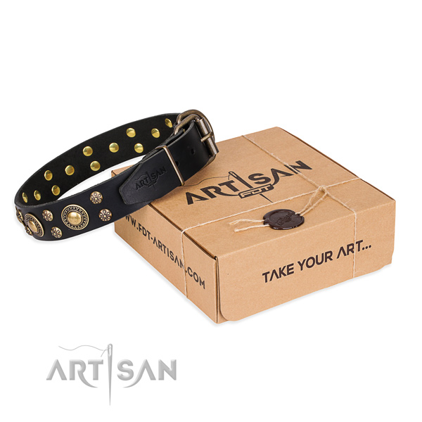 Everyday walking dog collar of quality natural leather with studs