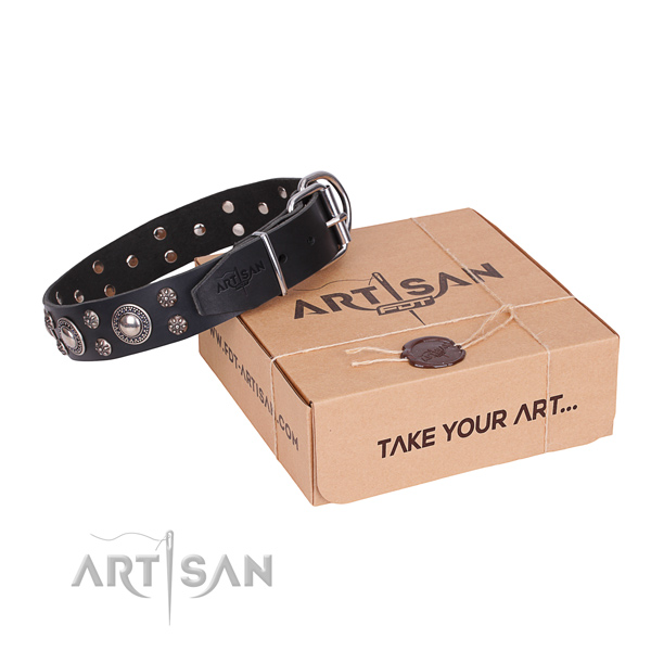 Fancy walking dog collar of strong full grain leather with adornments