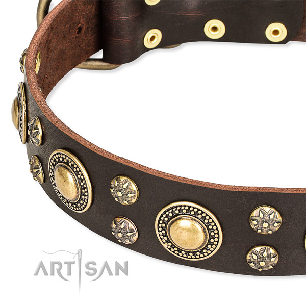 Everyday walking studded dog collar of fine quality genuine leather