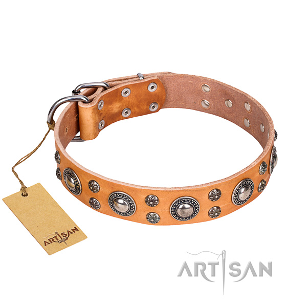 Daily walking dog collar of finest quality full grain leather with decorations