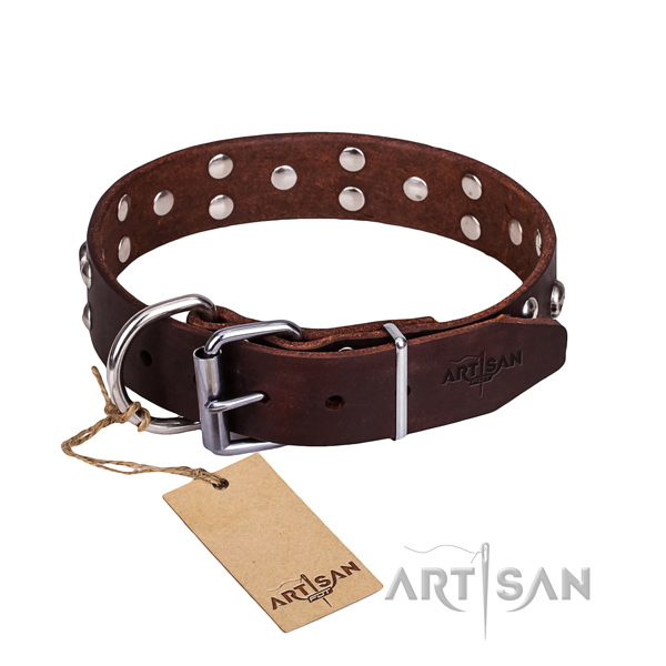 Everyday walking dog collar of best quality full grain genuine leather with adornments