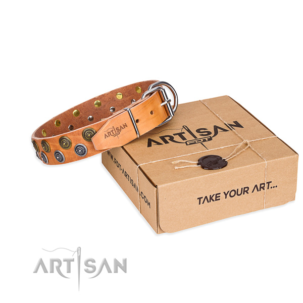 Fancy walking dog collar of best quality full grain natural leather with adornments