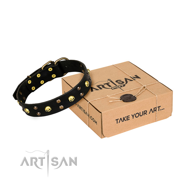 Everyday walking dog collar of fine quality natural leather with adornments