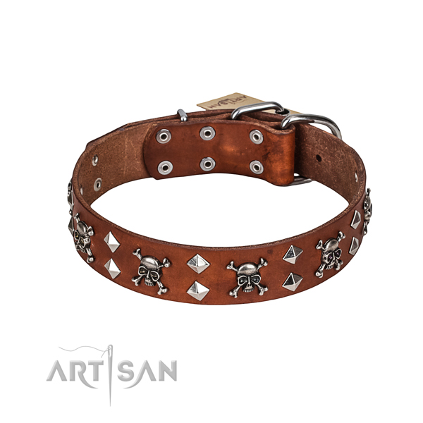 Daily walking dog collar of top notch full grain leather with decorations