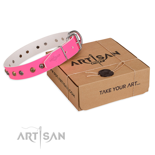 Fancy walking dog collar with Incredible rust resistant adornments