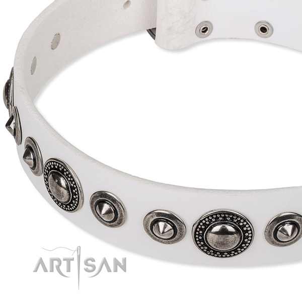 Basic training studded dog collar of top quality full grain leather
